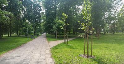 Kosztowna rewaloryzacja krotoszyńskiego parku
